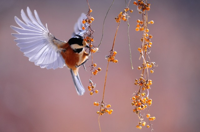 bird-1045954_1920 (1)